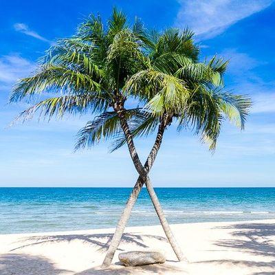 plage des caraibes