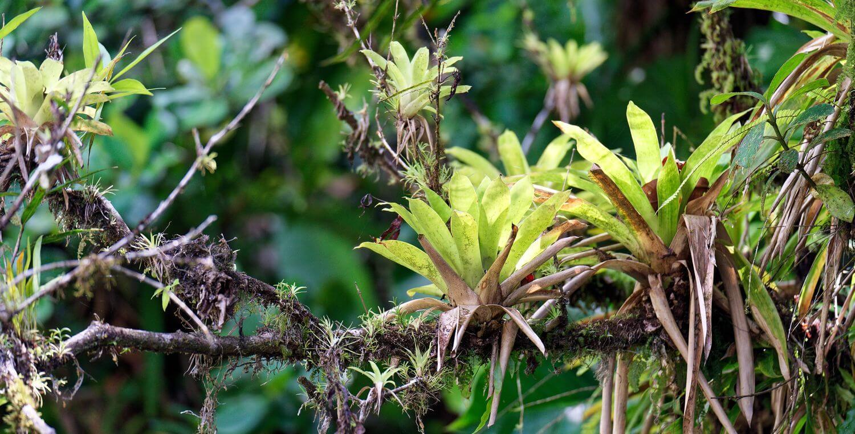 plante arbre cascade